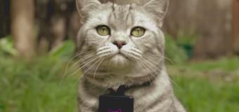 Have you heard of Catstacam?